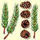 Pine Tree Branches and Cones - GraphicRiver Item for Sale