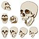 Seven Skulls Set - GraphicRiver Item for Sale