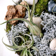 Tillandsia air and different succulent plant in ceramic pots - PhotoDune Item for Sale
