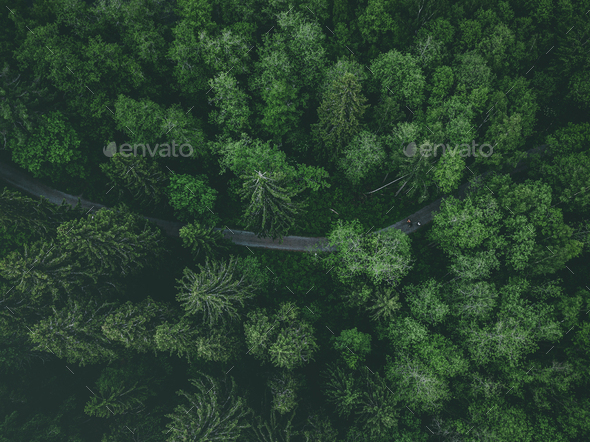 Aerial view of country road or footpath in the forest - Stock Photo - Images