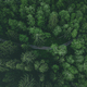 Aerial view of country road or footpath in the forest - PhotoDune Item for Sale