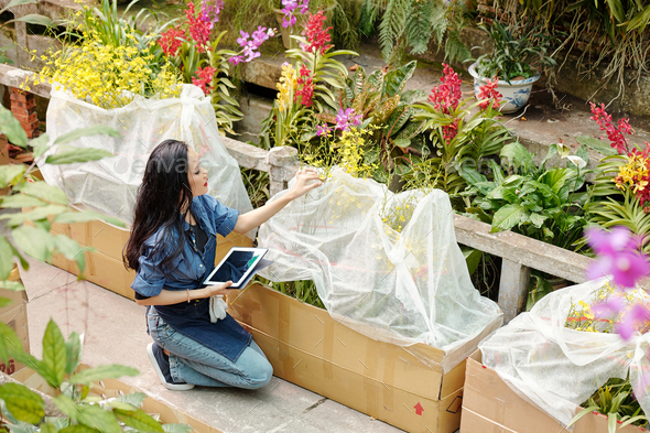 Woman working in greenhouse - Stock Photo - Images