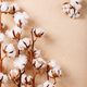 Dry cotton flower - PhotoDune Item for Sale