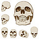 Six Skulls Set - GraphicRiver Item for Sale