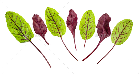 red and green fresh leaves of Chard isolated - Stock Photo - Images