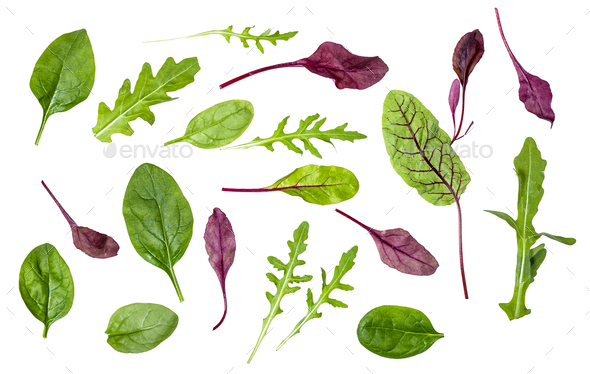 different leaves of leafy vegetables isolated - Stock Photo - Images