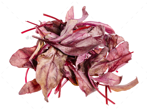 heap of fresh red Chard leafy vegetable isolated - Stock Photo - Images