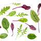 different leaves of leafy vegetables isolated - PhotoDune Item for Sale