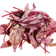 heap of fresh red Chard leafy vegetable isolated - PhotoDune Item for Sale