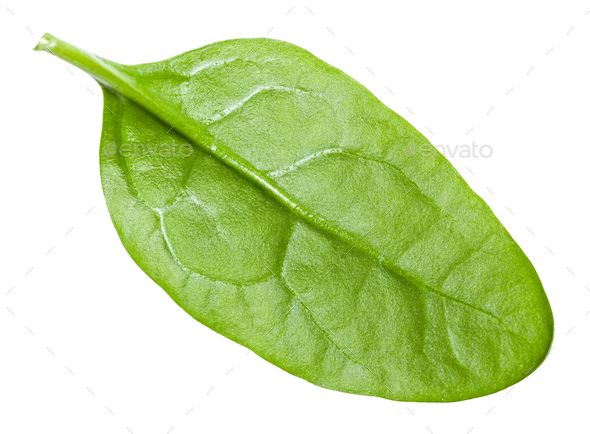 single natural green leaf of Spinach isolated - Stock Photo - Images