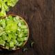 Green celery - PhotoDune Item for Sale