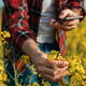 Farmer taking picture of blooming rapeseed plant with smartphone - PhotoDune Item for Sale