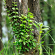 Parasitic vine wrapped around tree trunk in tropical forest - PhotoDune Item for Sale