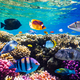 Different tropical fish on a coral reef in the Red Sea - PhotoDune Item for Sale