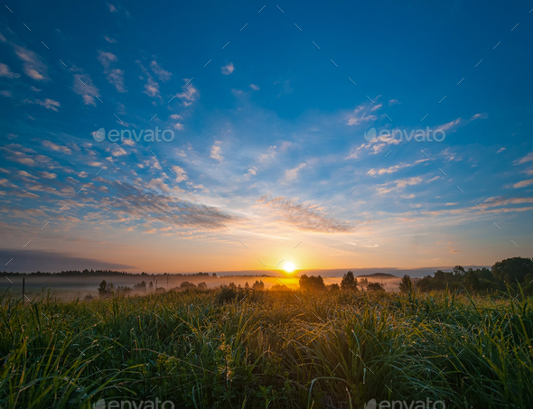 Grass on field with dew sparkle in morning light. - Stock Photo - Images
