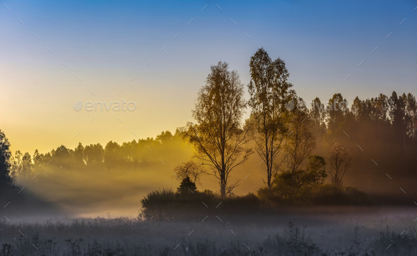 Sunrise misty forest landscape at autumn time. - Stock Photo - Images