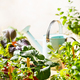 Home grown organic micro greens - PhotoDune Item for Sale