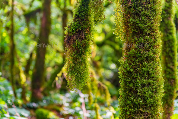 Close up of moss growing on tree branches - Stock Photo - Images
