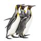 king penguin - PhotoDune Item for Sale