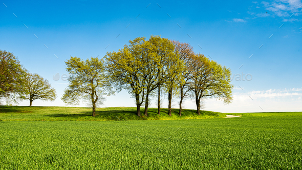 Green meadows with blue sky and clouds background - Stock Photo - Images
