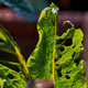 Many bite marks of pest on the vegetable leaves - PhotoDune Item for Sale