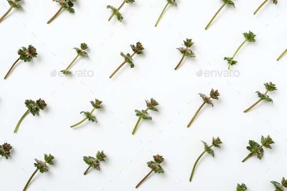 Minimal natural pattern with green plants - Stock Photo - Images