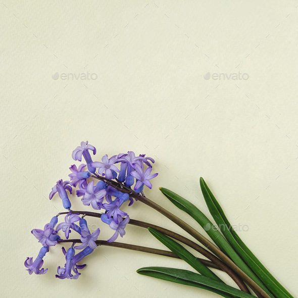 Small bouquet of blue flowers on yellow background and copy space for text - Stock Photo - Images