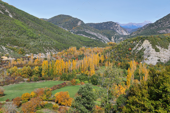 Gorgeous forest near Biniés, Aragonese pyrenees, Huesca province, Spain - Stock Photo - Images