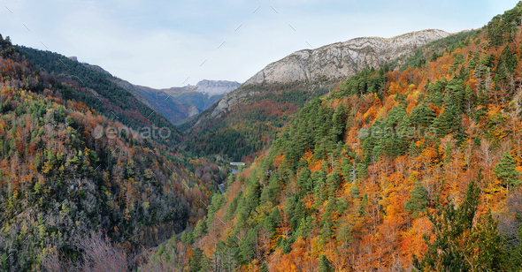 Gorgeous forest in Hecho Valley, Aragonese pyrenees, Huesca province, Spain - Stock Photo - Images