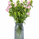pink campanula champion in glass vase - PhotoDune Item for Sale