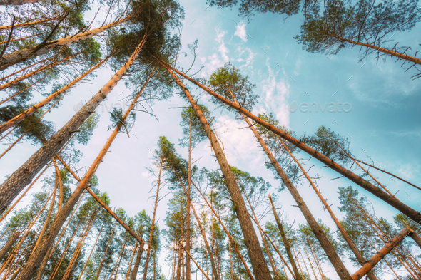 Windfall In Forest. Storm Damage - Stock Photo - Images