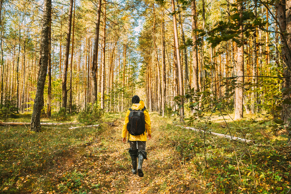 Young Woman Tourist Lady Dressed In Yellow Jacket Of Autumn Forest. Hiker Walking In Fall Mixed - Stock Photo - Images