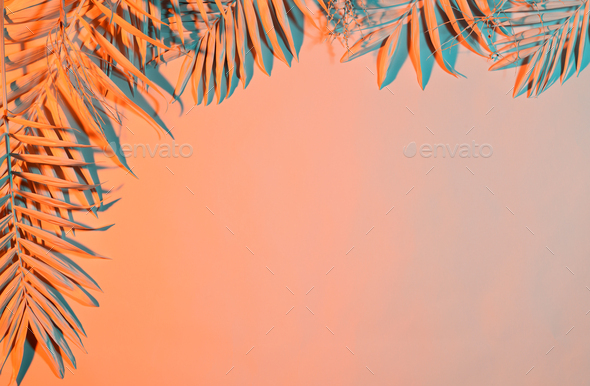 Pastel colored palm leaves - Stock Photo - Images