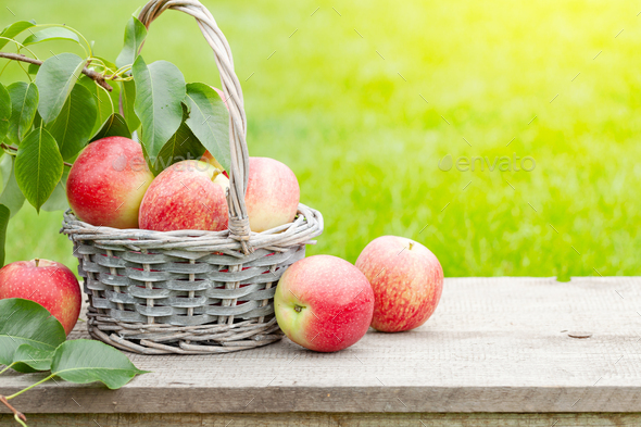 Ripe garden apple fruits in basket - Stock Photo - Images