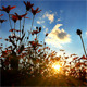 Sunset Behind Flowers 2 - VideoHive Item for Sale
