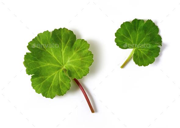 fresh green flower leaves - Stock Photo - Images