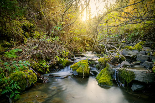 Beautiful landscape with stream and sunbeams through trees - Stock Photo - Images