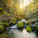 Beautiful landscape with stream and sunbeams through trees - PhotoDune Item for Sale