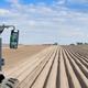 planting a potato - PhotoDune Item for Sale