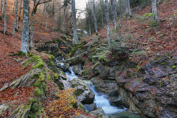 Gorgeous forest in Gamueta forest, Aragonese pyrenees, Huesca province, Spain - Stock Photo - Images