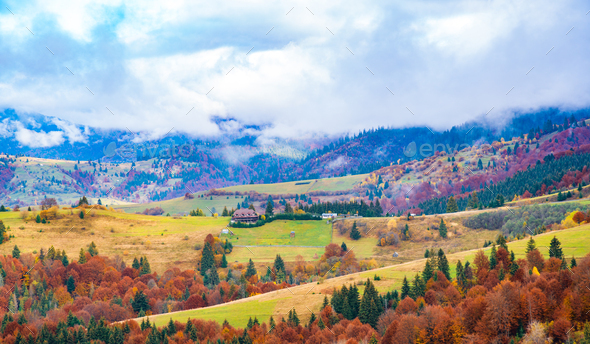 Colorful forests in the warm Carpathian mountains covered with thick gray fog - Stock Photo - Images