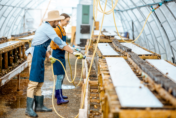 Man and woman working on the farm for snails growing - Stock Photo - Images