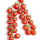 Fresh red cherry tomatoes. Small tomatoes on branch. - PhotoDune Item for Sale