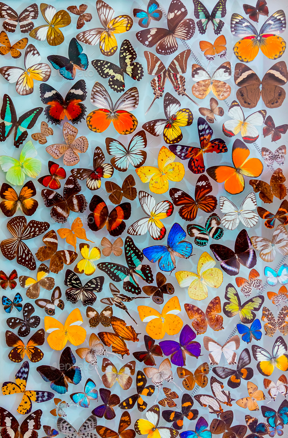 Seamless Butterfly Background - Stock Photo - Images