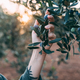 Woman hold olive tree branch in sunset - PhotoDune Item for Sale