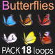 Butterflies 6 Kinds - VideoHive Item for Sale