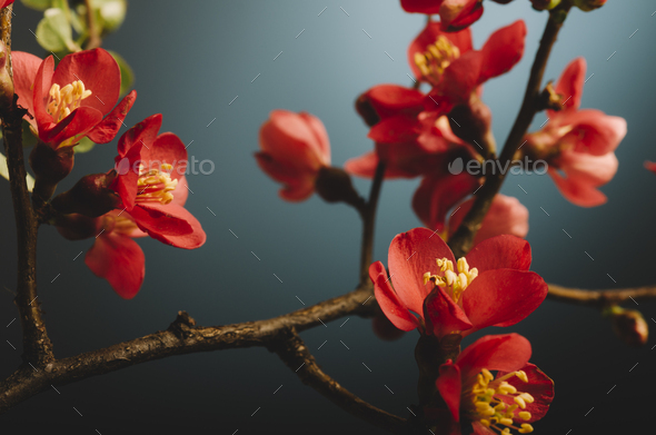 Spring flower over blue - Stock Photo - Images