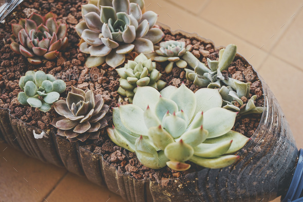 Recycled pot full of succulent plants - Stock Photo - Images