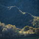 Limestone hills emerge between native deciduous forest - PhotoDune Item for Sale
