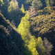 Sunlight penetrates a narrow gorge and illuminates the treetops - PhotoDune Item for Sale